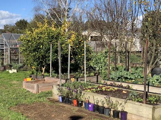 Edible garden ideas.