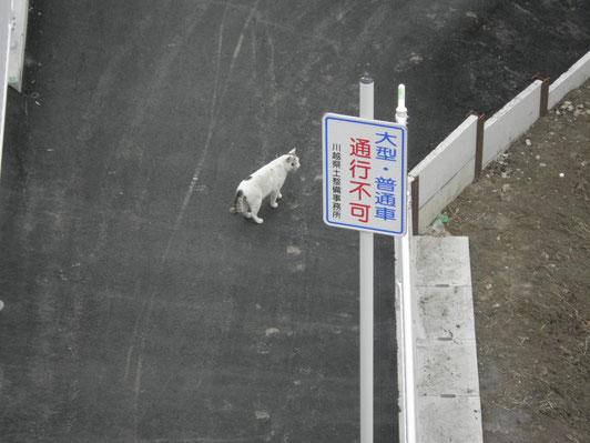 鷺ノ森3工区、一番の通行者だにゃん(*^ω^*)