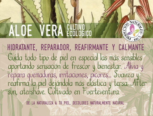 aloe vera de cultivo ecológico fuerteventura-cosmética natural ecológica