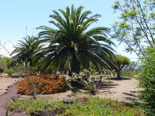 Endemische Pflanzen, der Garten wird biologisch bewirtschaftet, Puntagorda und Tijarafe sind die schönsten Orte der Insel La Palma