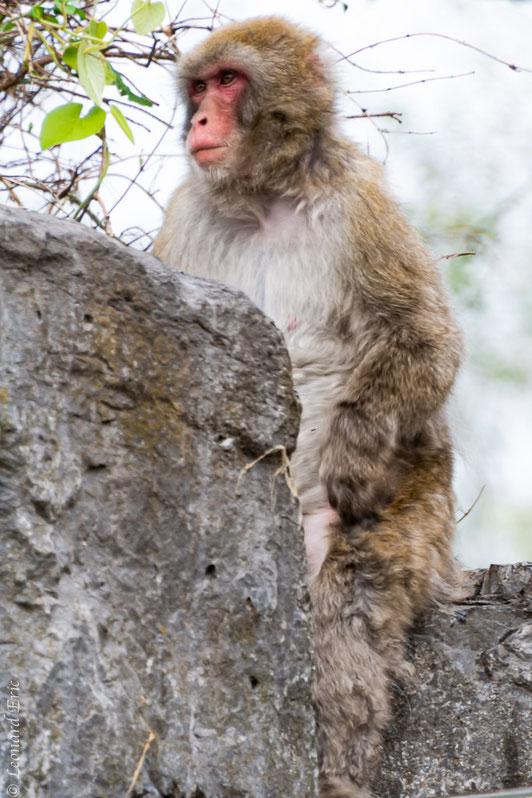 Photo animalière, Le plaisir photographique, Léonard Eric, après confinement !