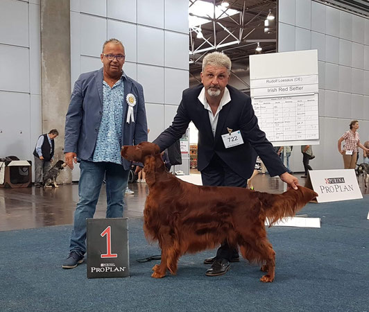 German Winner Leipzig 2018 Irish Setter Guardian Angel the Irish Spirit of Nature (Milow)
