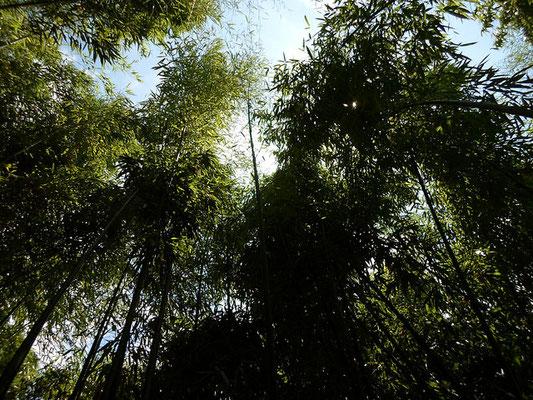 11th WORLD BAMBOO CONGRESS  - bamboo - Alain Van den Hende  Licence CC BY-SA-4.0