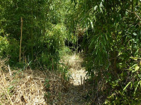Journée Mondiale du Bambou - Bamboo - Bambousaie en France par Alain Van den Hende -Licence CC BY-NC-SA-3.0 A01.jpg