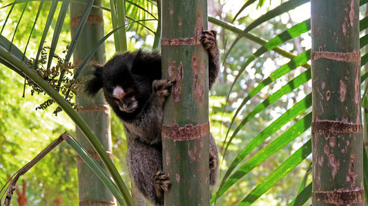 animaux et bambous