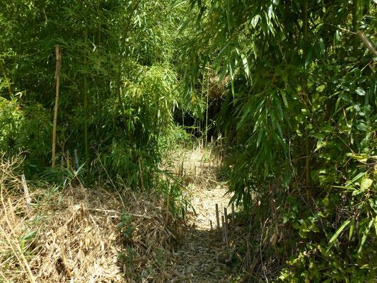 bamboo - by Alain Van den Hende 17072262  Licence CC BY-NC-SA-3.0