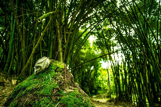 forest green trees bamboo bambiu arbres foret nature bambousaie bambouseraie
