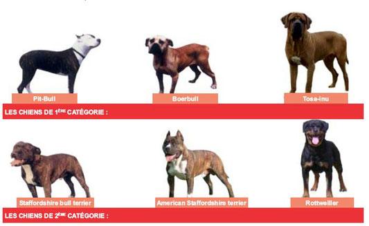 chiens catégorie 1 2