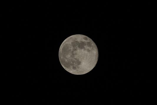 2019年3月22日未明の月