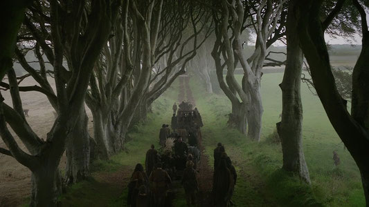 - Photo Libre de Droit - Dark Hedges -