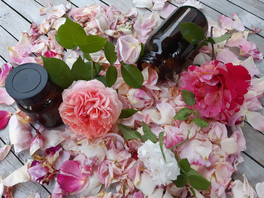 Bild mit aromatischen Rosenblüten