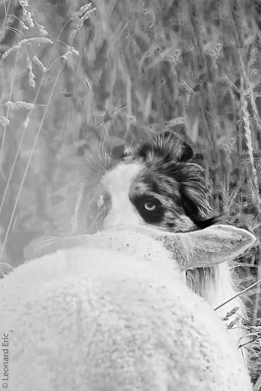 Photo animalière, Le plaisir photographique, Léonard Eric, rencontre insolite