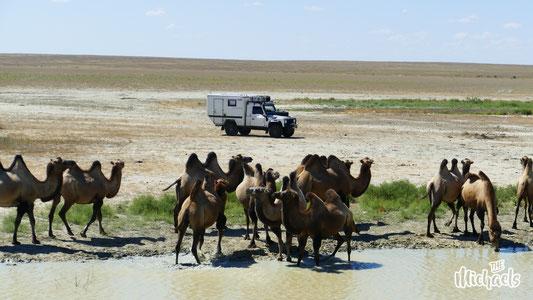 The Michaels, Kasachstan von West nach Ost, Kasachstan mit dem eigenen Auto