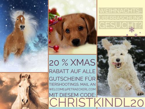 Geschenkidee Weihnachten Gutscheine für Tiershooting Hundeshooting Pferdeshooting Spende an Tierheim München Pferdefotografie Hundefotografie München Bayern ab 75 €