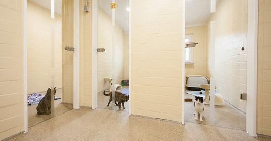 willkommen beim tierheim esslingen tierschutzverein esslingen u u e v mit tierheim esslingen. Black Bedroom Furniture Sets. Home Design Ideas