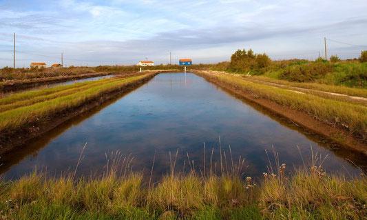 Marais de claires à Brouage