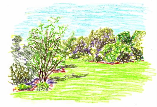 Dessin du fruticetum (pastels). © Sandrine Tellier