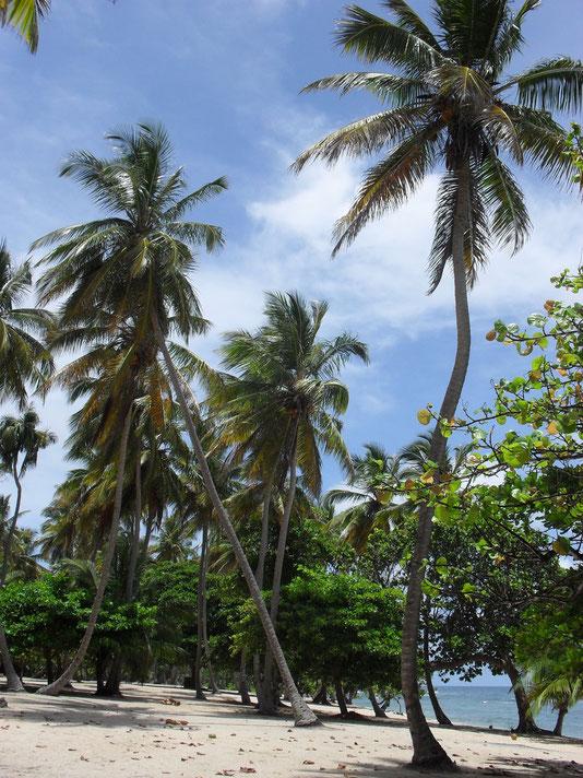 Incantevole plaja caraibica