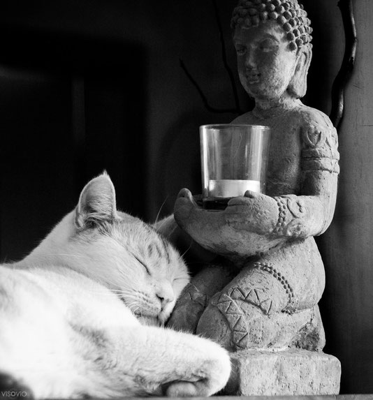 Buddha-Kater 1 | visovio 072015