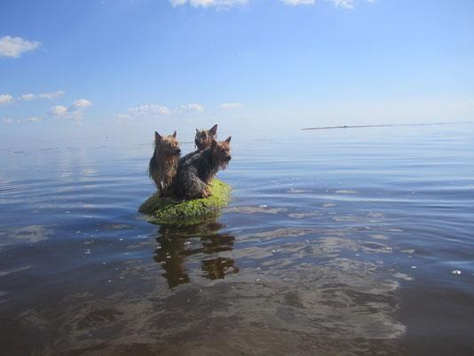 Три девицы на необитаемом острове - русалки))