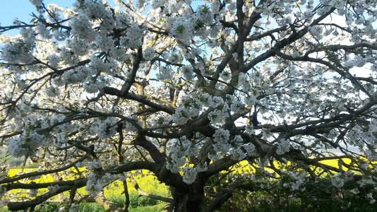 Frühling in Dankmarshausen
