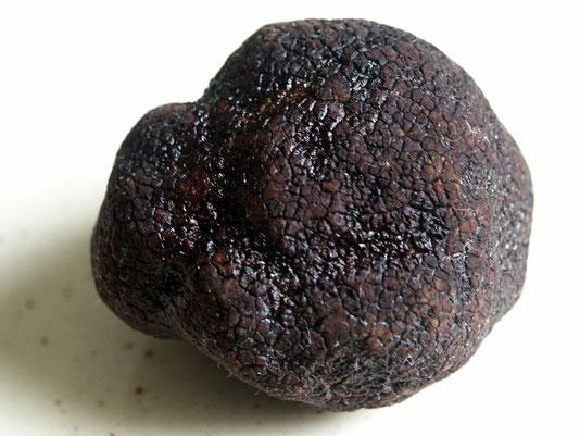 Photo de la précieuse truffe noire (Tuber melanosporum Vitt.)