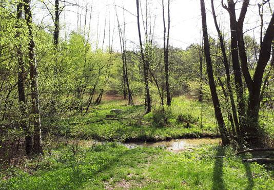 Sattes Grün im Naturschutzgebiet © Stadt Schloss Holte-Stukenbrock