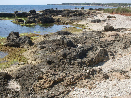 """Litorale fossilifero di Sant'Agostino: qui affiorano dei calcari a """"panchina"""" risalenti al Neotirreniano (circa 115.000-72.000 anni fa) ricchi di malacofauna simile all'attuale"""