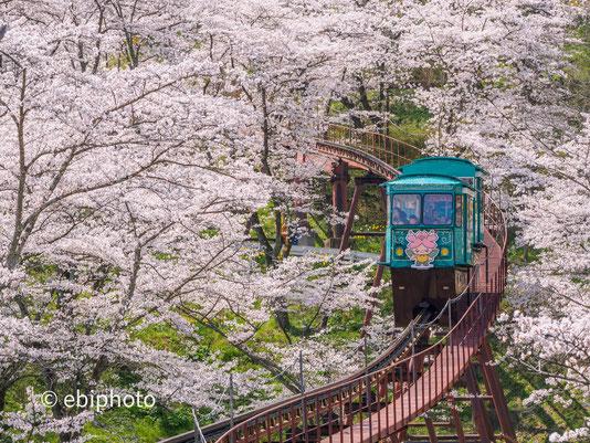 「【ホームメイト・リサーチ】春の桜写真・動画コンテスト」佳作