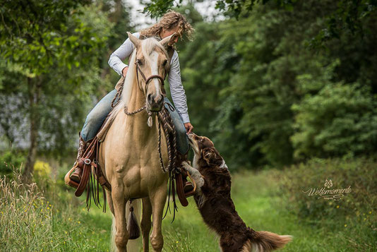 Lusitanostute Fee - Training mit Hund im Gelände ( Foto: www.wolfsmomente.de )