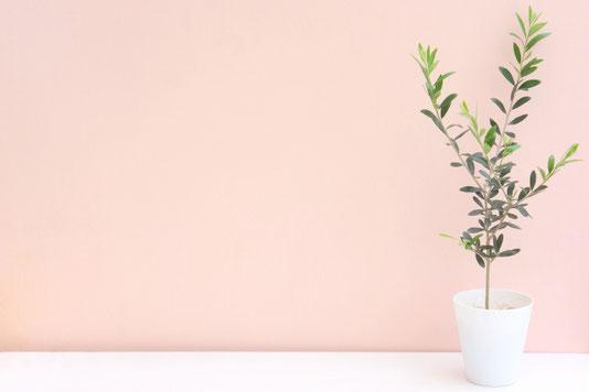 採れたての野菜。きゅうり、トマト、セロリ。ボーダーとジーンズの女性。
