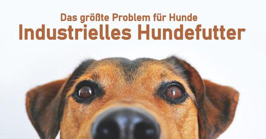 Industrielles Hundefutter oder WARUM HAUSTIERFUTTER VON REICO VITAL!