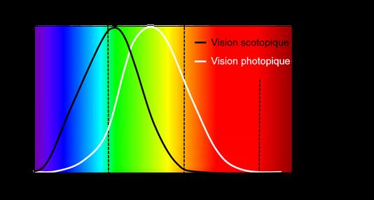 courbe d'efficacité spectrale lumineuse (vision photopique versus vision scotopique)