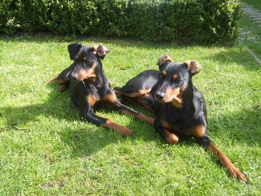 Geeva (4 Monate) und Sally (3,5 Jahre) passen auf!!