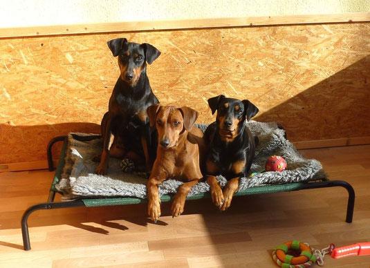 05.11.2011, Geeva, Onnie und Sally !!