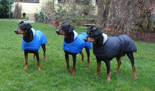 Die drei Mädels (Sunny, Maggie und Geeva vor dem Spaziergang ;-))  )