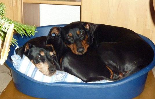 """Sally (12Jahre) und Geeva (7Jahre)  """"Platz ist in der kleinsten """"Hütte""""  ;-)"""