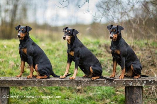 """Fotoshooting !! Unsere drei """"Damen"""" (Sunny, Sally, Geeva) im März 2016 ;-))"""