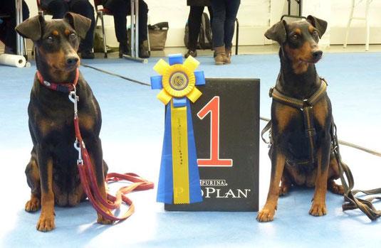 Geeva (Veteranenklasse) 1.Platz und Bester Veteran; und Sunny: offene Klasse  V1, CACIB !!!