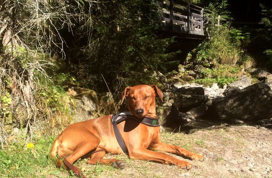 Kimba  genießt die Sonne in den Südtiroler Bergen ;-))