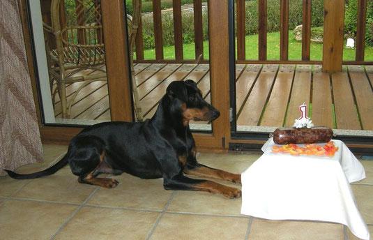 """Jacky (Geronimo vom Sylbachtal) die Vorfreude auf seine """"Geburtstagswurst"""" ist riesengroß, trotzdem wartet er brav  ;-))"""