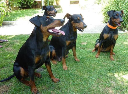 Maggie, Geeva, Sunny und Leila (von links nach rechts)