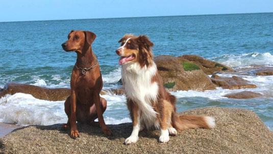 Fero und Zoe in Frankreich