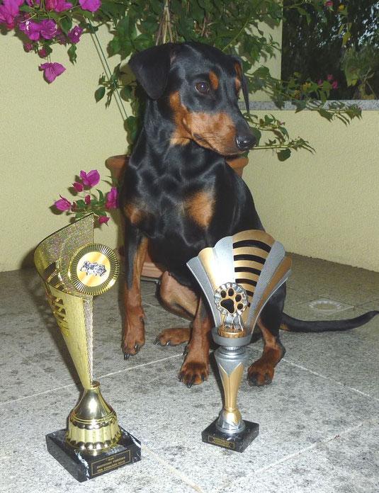 23.09.2018, stolze Maggie mit ihren Pokalen (BOB und Bester Jugendhund)