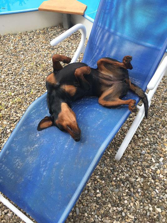 03.06.2018, Merle genießt den Sommer am Pool  ;-)))
