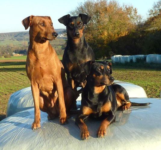 Onnie, Geeva und Sally,  November 2012