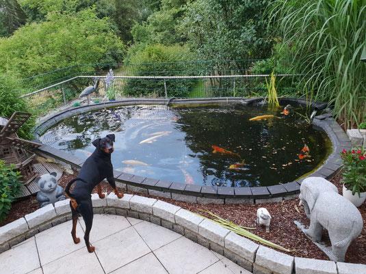 """Lucky, der """"Herr der Fische""""  ;-)))"""