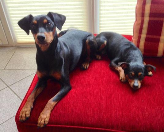 """11. Mai 2014, Frieda (First-Lady vom Sylbachtal, 21 Monate alt) und Rufus wünschen einen """"schönen Muttertag"""" !!!"""