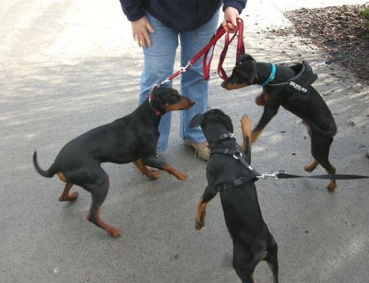 22.02.2014, Sunny, Sookie und Jacky freuen sich und spielen ausgelassen ;-)