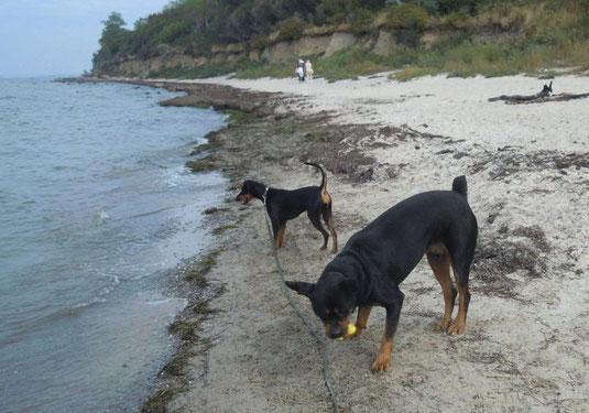 """Sept. 2013, Fini und """"Freund"""" Spike am Strand !!!"""